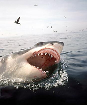 حقائق مذهله عن القرش